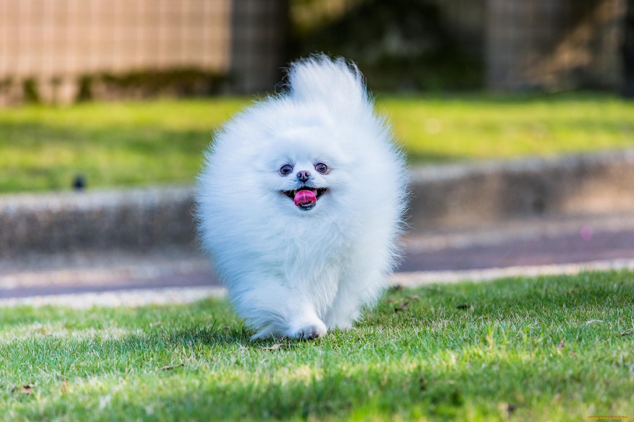 Картинки дикая собака динго или повесть о первой любви представляет